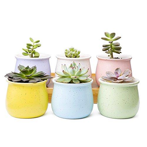 "Jiimz 9 Beautifully Different 2.5/"" Mixed Succulent Plants"
