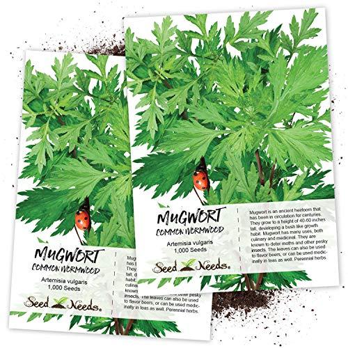 Seed Needs, Mugwort Herb Artemisia vulgaris Twin Pack of 1,000 Seeds Each